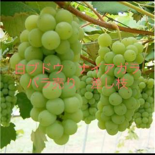 最終値下げ!!白ブドウ ナイアガラ バラ売り差し枝&おまけ(その他)