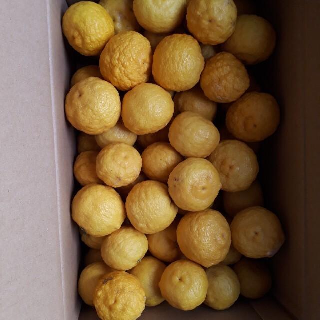 国産無農薬 ゆず 5kg 送料無料 訳あり 食品/飲料/酒の食品(フルーツ)の商品写真