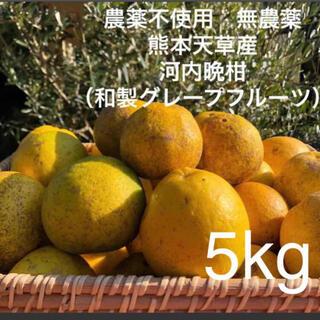 農薬不使用 無農薬 落下 河内晩柑 (和製グレープフルーツ)5kg 熊本天草産(フルーツ)