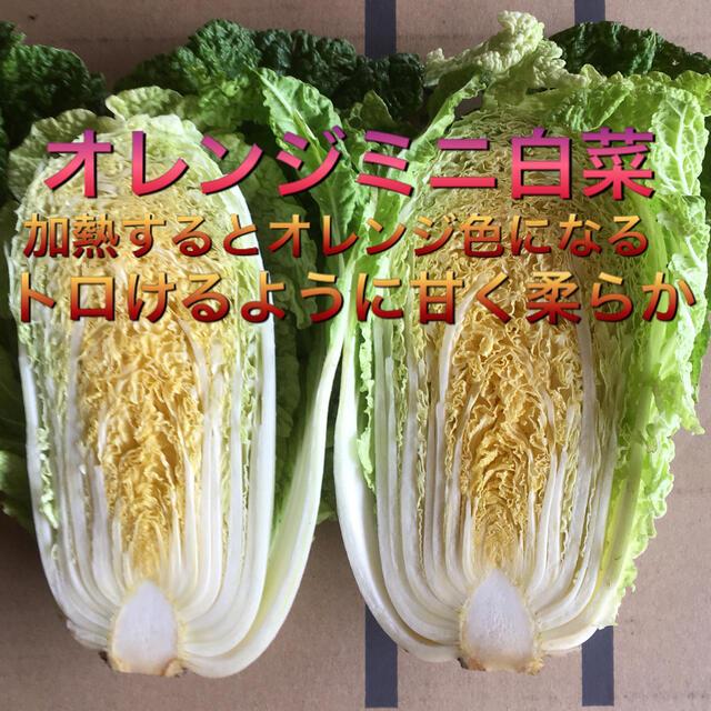 8種入り野菜BOX クリスマスSALE &コシヒカリ10kg 食品/飲料/酒の食品(野菜)の商品写真