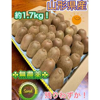 残りわずか!山形県産 ☆無農薬☆キウイフルーツ中小~Sたっぷり1.7kg!!(フルーツ)