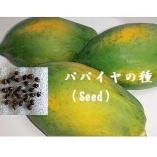 R1215『パパイヤの種 30粒』  Seed タネ(フルーツ)