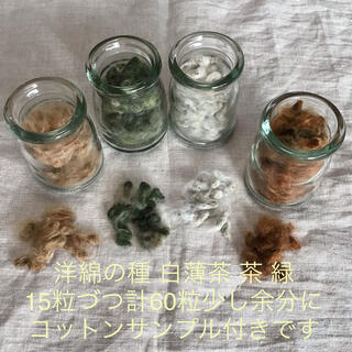*** 洋綿の種 白薄茶 茶 緑 各15粒 計60粒 少し余分に  ***(その他)