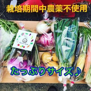【たっぷりサイズ】渥美半島から直送!旬彩野菜バスケット(野菜)