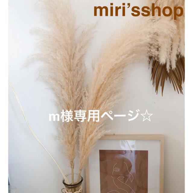 パンパスグラス m様専用ページ ハンドメイドのフラワー/ガーデン(ドライフラワー)の商品写真