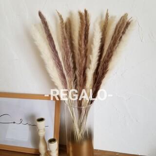 大人気 パンパスグラス テールリード 花材 ドライフラワー 韓国インテリア(ドライフラワー)