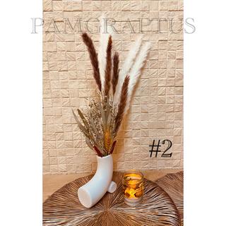 フランフラン(Francfranc)の#2 パンパスグラス テールリード 10本 ホワイト(ドライフラワー)