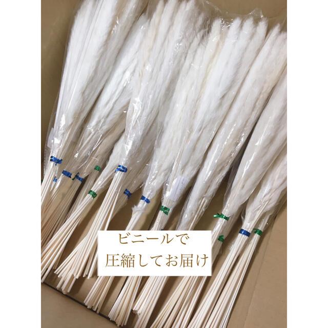 ♡15本♡ パンパスグラス ホワイト 50cm ハンドメイドのフラワー/ガーデン(ドライフラワー)の商品写真