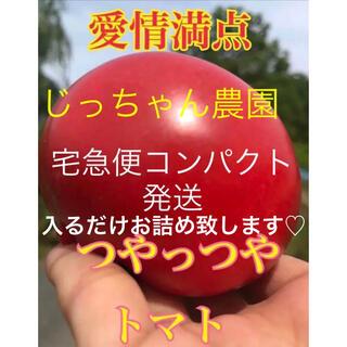 トマト とまと 宅急便コンパクト 新鮮野菜 農家直送 ハウス栽培(野菜)