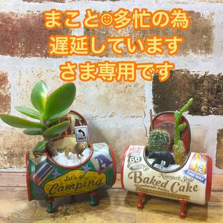 多肉植物 ちびジュース缶(KUSA CAN)(赤ベージュ缶)(その他)