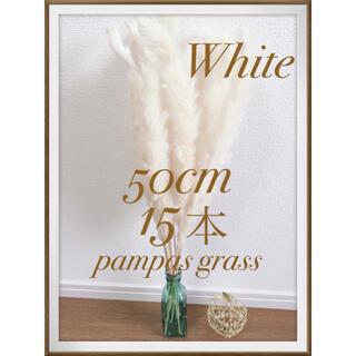 ♡ラクマ限定15本♡ パンパスグラス ホワイト(ドライフラワー)