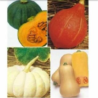 カボチャ種●東京南瓜 打木赤皮甘栗南瓜 白皮砂糖南瓜 バターナッツ南瓜(野菜)