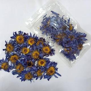 ブルーロータス 10g Blue Louts(ドライフラワー)