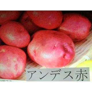 じゃがいも♥アンデス赤9キロ(野菜)