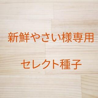 新鮮やさい様専用 セレクト種子 13袋(野菜)
