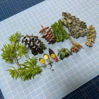 多肉植物 カット苗 葉挿し 画像全部 ④(その他)