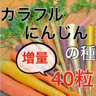 【黄・橙・紫‼️】カラフルにんじんの種 40粒 MIX ニンジン 人参 野菜 種(野菜)