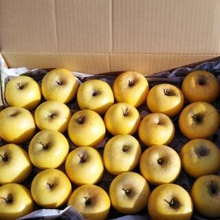 家庭用 小玉 シナノゴールド 約5キロ (フルーツ)