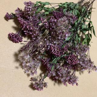 ドライフラワー 茎付き フジバカマ スワッグ ブーケ 花束(ドライフラワー)