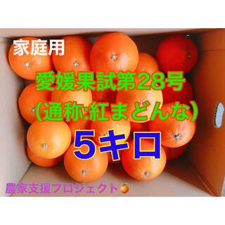 マドンナ5キロ 専用ページ作成(フルーツ)