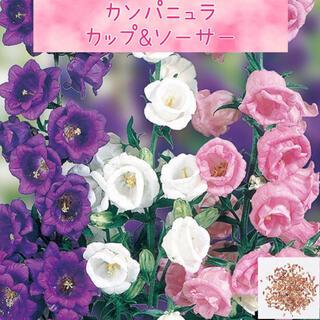 カップとお皿のような可愛い花♪カンパニュラ カップ&ソーサー  種40粒(その他)