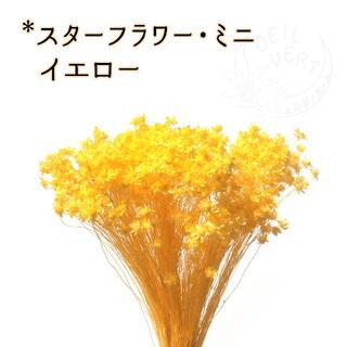 スターフラワー・ミニ イエロー 2g(ドライフラワー)