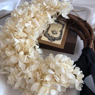 ドライフラワー 紫陽花(プリザーブド)  ホワイトリース(ドライフラワー)