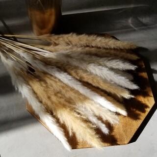 パンパスグラス ドライフラワー テールリード 花材 インテリア(ドライフラワー)