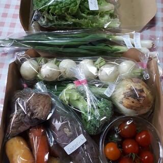 お野菜詰め合わせ80サイズ(野菜)