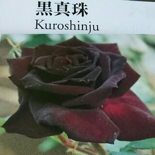 黒真珠 庭薔薇の剪定枝(その他)