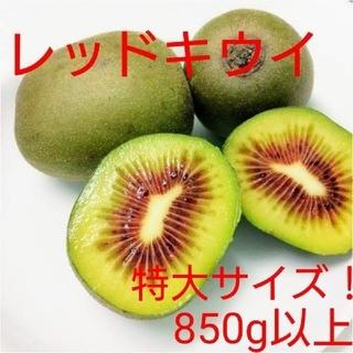 【期間限定値下げ!】無農薬!キウイフルーツ【レッドキウイ】特大サイズ8個(フルーツ)