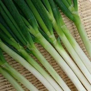 茨城産 白ネギ 色々サイズ 9~12本 ネコポス発送(野菜)