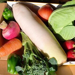 無農薬野菜セット(野菜)
