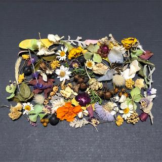 小さなお花の花材  ドライフラワー ナチュラル 素材  S-1(ドライフラワー)