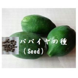 R1226『パパイヤの種 30粒』 野菜 Seed 青パパイヤ タネ(野菜)