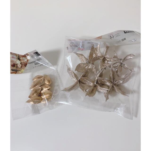 シクンシの実 綿がら ハンドメイドのフラワー/ガーデン(ドライフラワー)の商品写真