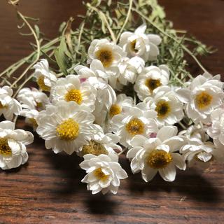 ドライフラワー花かんざし ハーバリウム20本(ドライフラワー)