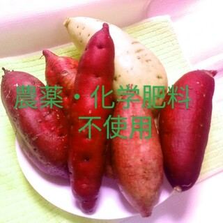 3kgパープルスイートロード農薬化学有機肥料不使用さつまいも🍠(野菜)