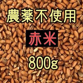 赤米(古代米) 愛媛県産 800g(米/穀物)