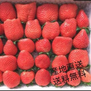 お徳用苺  850g   大きさ・品種それぞれ(フルーツ)