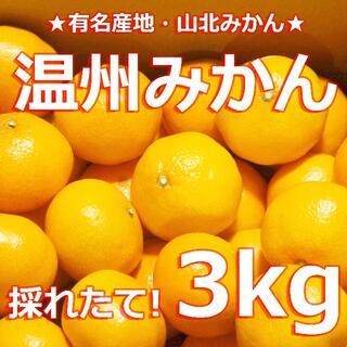 ★山北みかん★【温州みかん 3キロ】★有名産地★採れたて直送!★ 蜜柑 3kg(フルーツ)