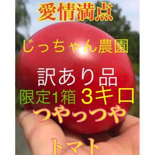 限定1箱 お買い得品 訳あり品  トマト とまと 新鮮野菜 農家直送 年末セール(野菜)