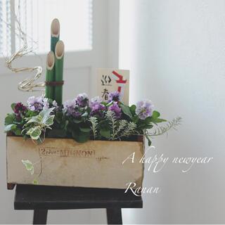 new✩.*˚お正月❁❀✿✾ゾウさんビオラの寄せ植え❁❀✿✾贈り物花(プランター)