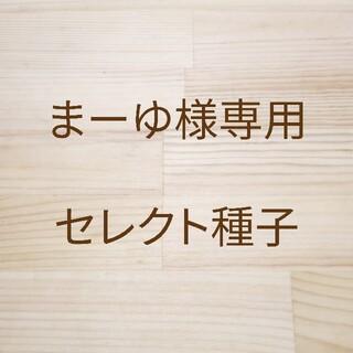 まーゆ様専用 セレクト種子 10袋(野菜)
