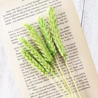 小麦  ライトグリーン 5本(ドライフラワー)