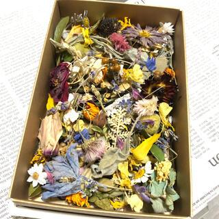 [訳あり品]花材増量パック 小花と花びらと葉と木の実 ドライフラワー L(ドライフラワー)