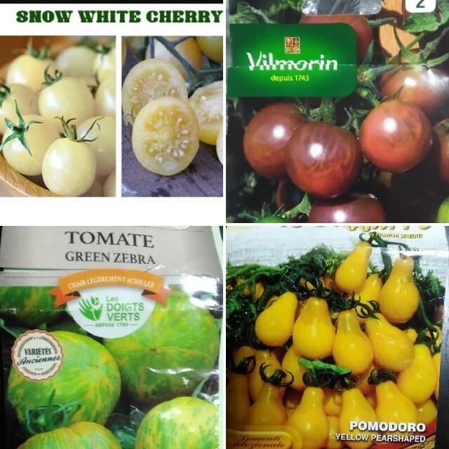 1月~5月蒔き イタリア野菜の種子など。カラフルなトマトの種 4種類10粒ずつ 食品/飲料/酒の食品(野菜)の商品写真