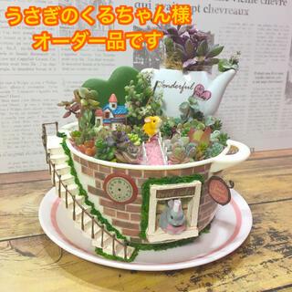 多肉植物の寄せ植え 妖精の庭(soup cup)(その他)