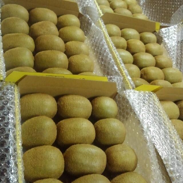 山形県産グリーンキウイ 食品/飲料/酒の食品(野菜)の商品写真