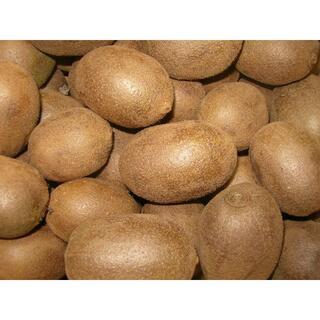キウイフルーツ 3kg(フルーツ)